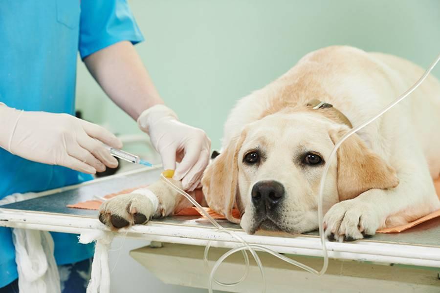 首发丨爱宠医生获战略融资上千万元,致力打造宠物医院一站式服务平台