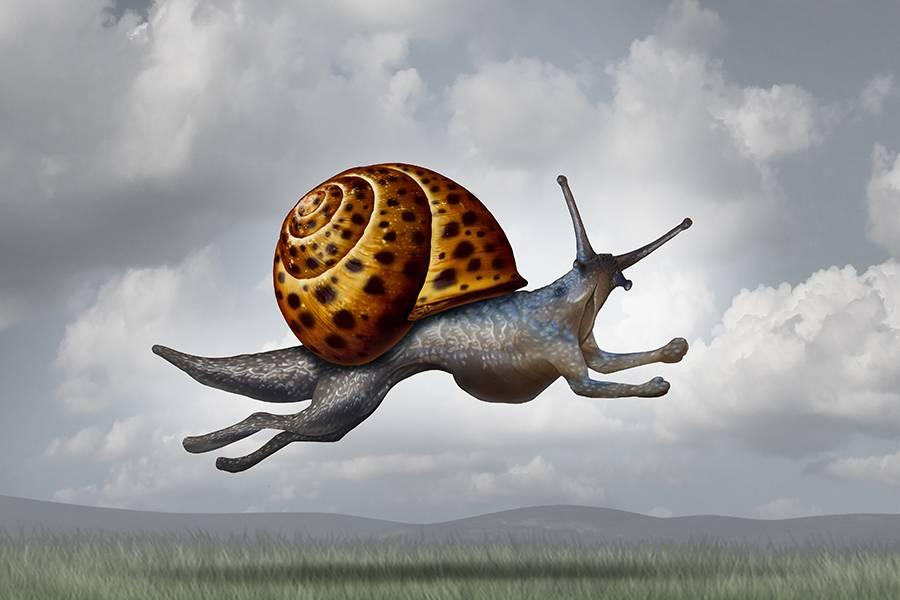 蜗牛,速度