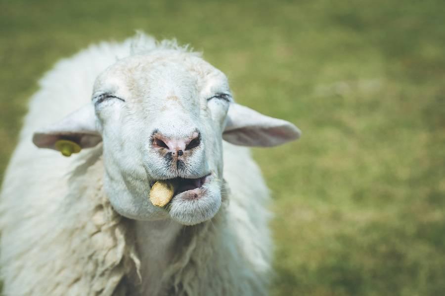 人工智能热潮袭来,谁在薅羊毛,谁会享红利?