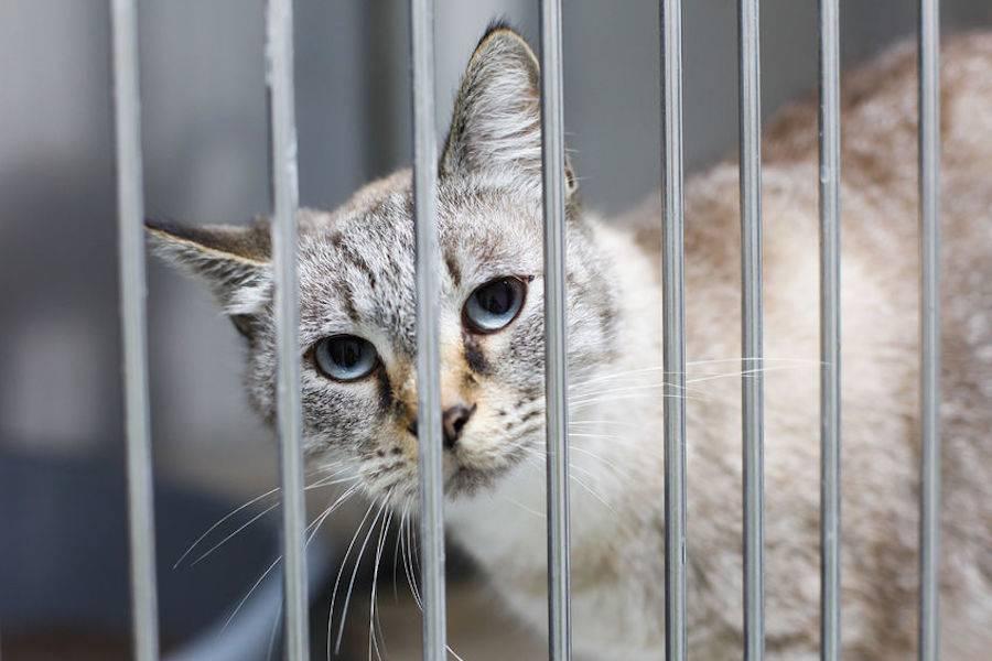 牛栏里的猫,宠物经济