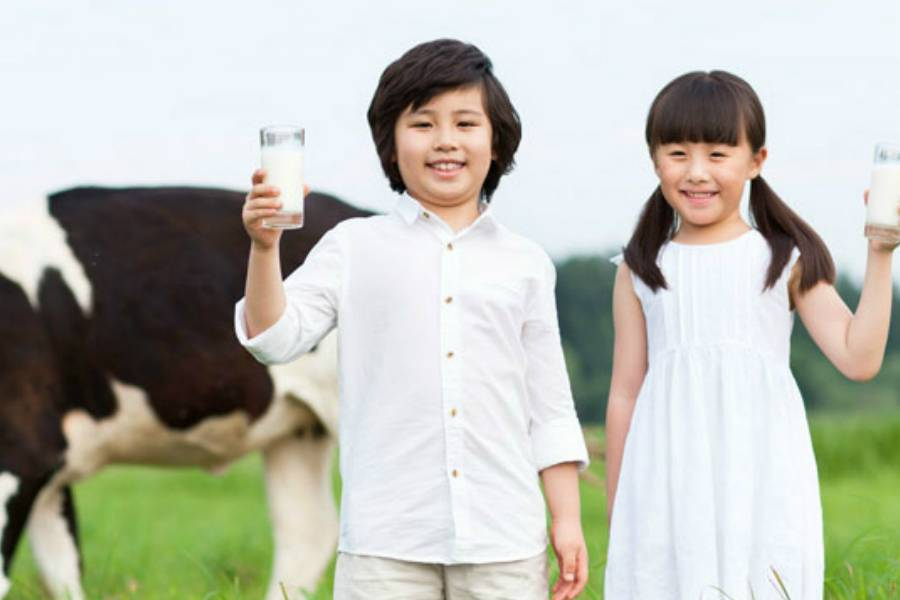 伊利,牧场,牛奶