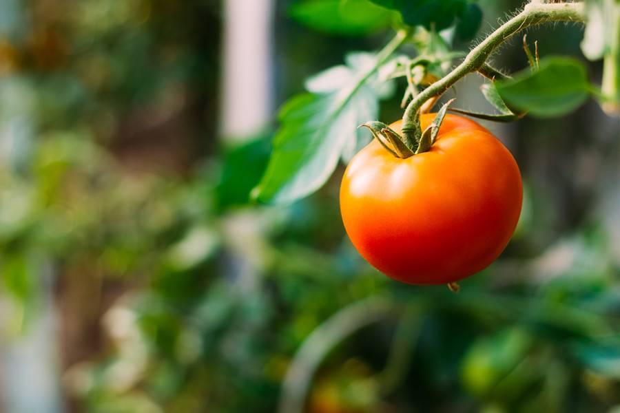 农业物流,农产品