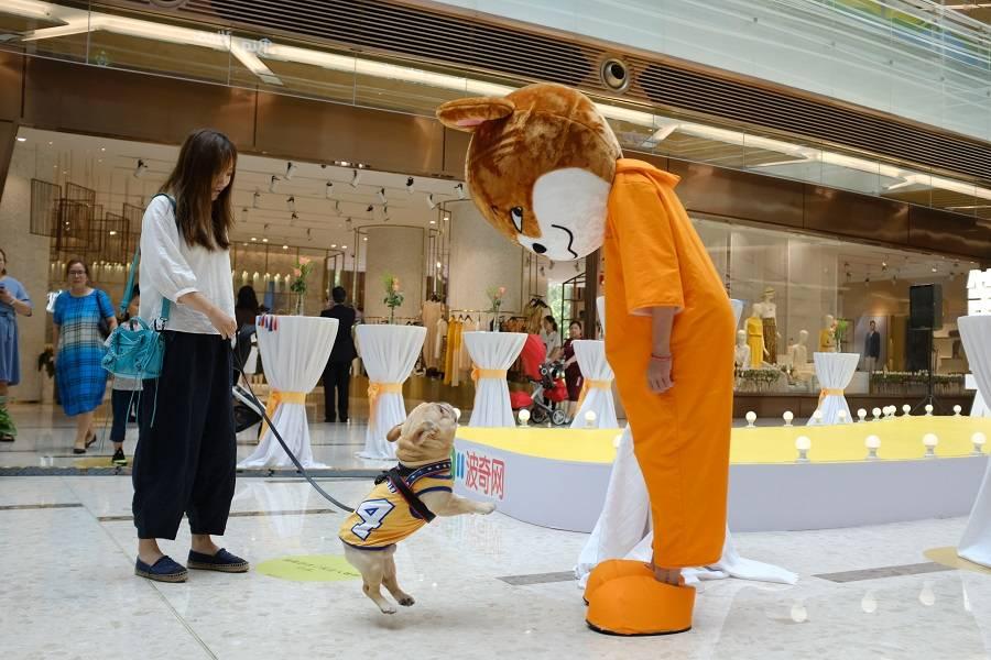 首发丨波奇网千万元投资兴牧,布局宠物医疗