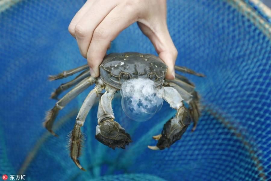 一只螃蟹背后的供应链故事