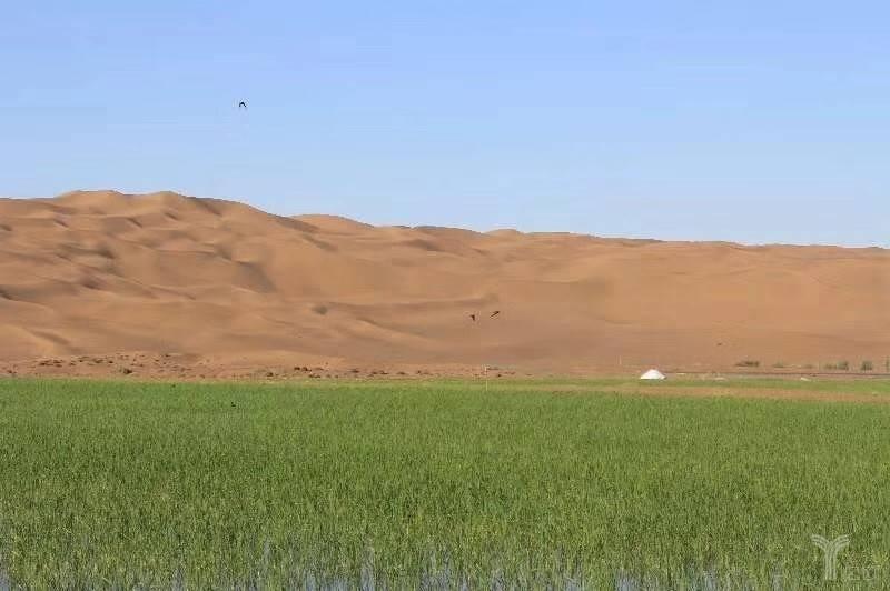 沙漠可以变良田,沙粮农业获4250万元天使融资