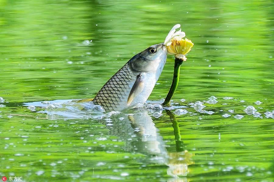 专访 | 江边城外孟洪波:一条鱼如何从巫山游遍全国