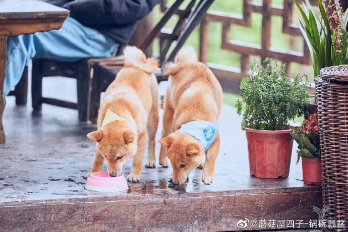 亿欧智库:蘑菇屋四子-锅碗瓢盆
