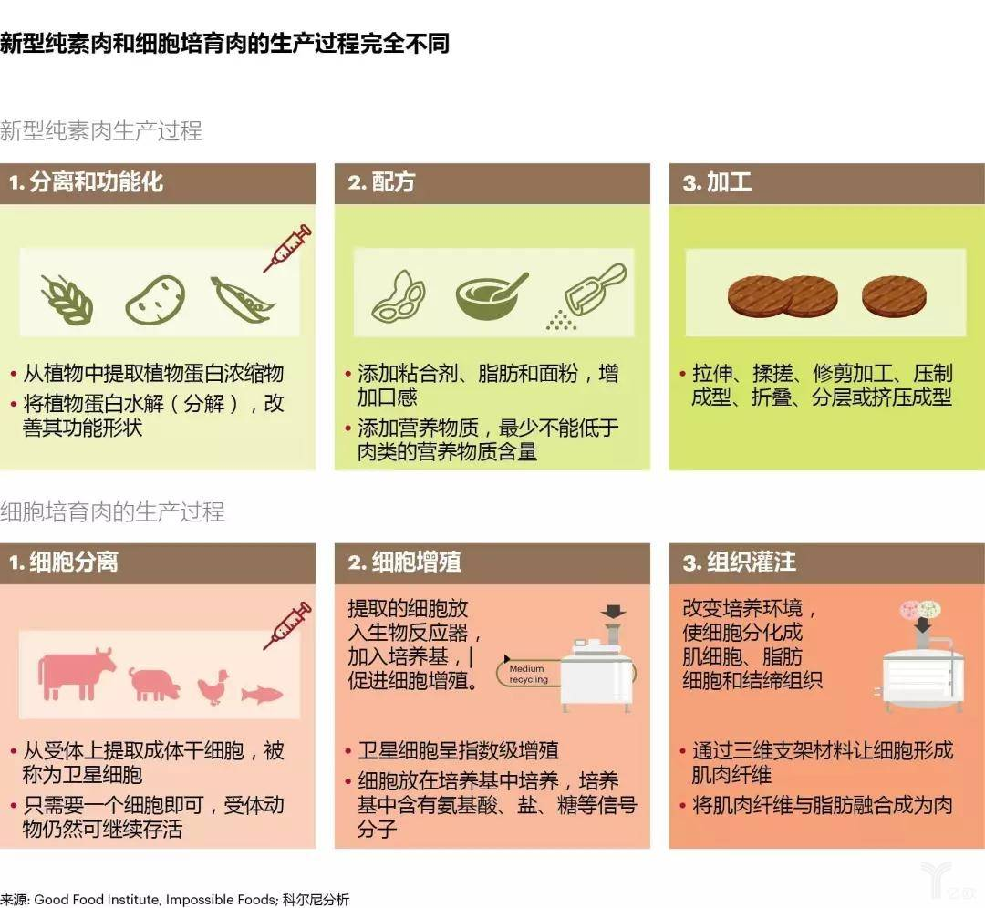新型纯素肉和细胞培育肉的生产过程完全不同