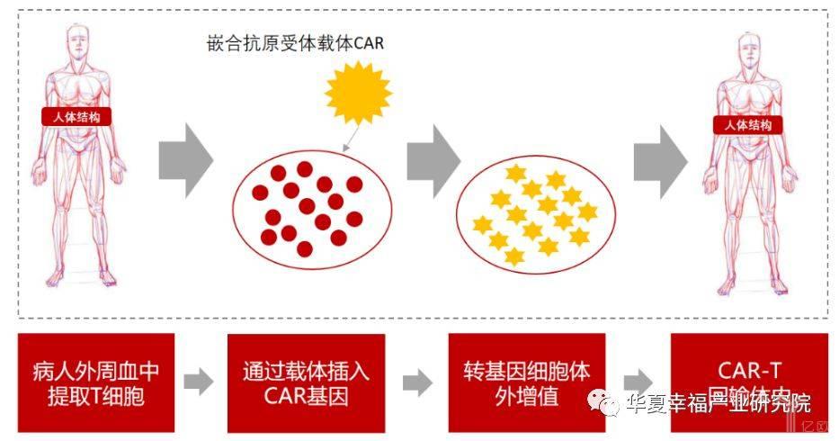 亿欧智库:过继细胞免疫疗法CAR-T的作用原理